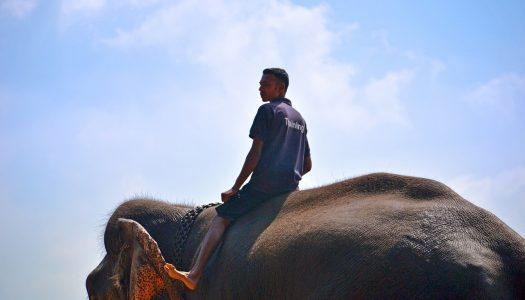 Cambodia Will Ban Elephant Rides at Angkor Wat in 2020