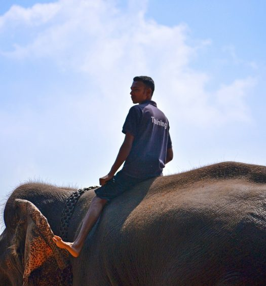 elephant ride ban - travel treasures