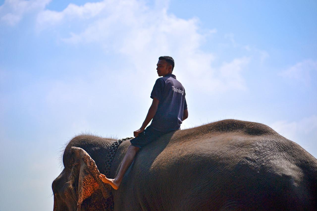 elephant ride ban - travel treasures