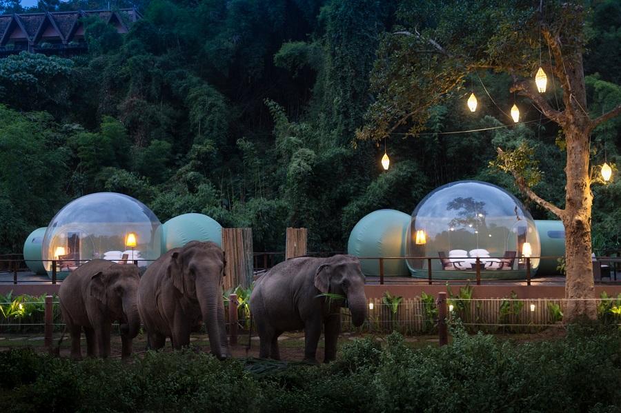 Jungle Bubbles at Dawn - travel treasures