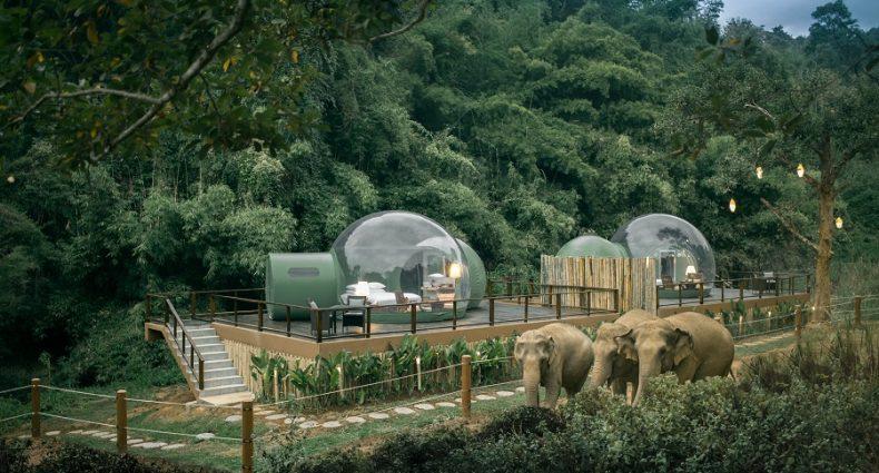Jungle Bubbles at Dusk - travel treasures
